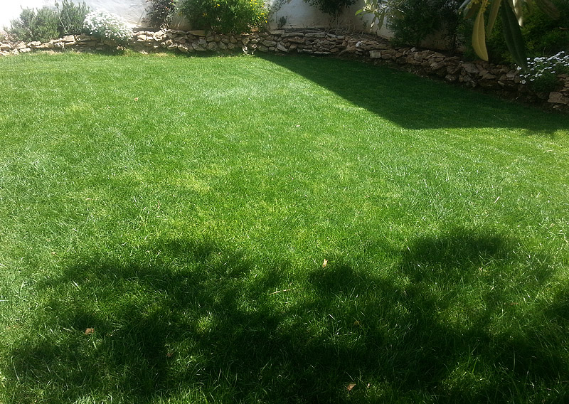 The lawn in the garden of Casita DeLuca