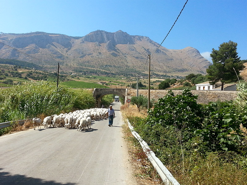 A shepherd and his sheep in Sicily