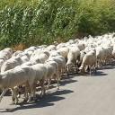 Traffic jam Sicilian style…