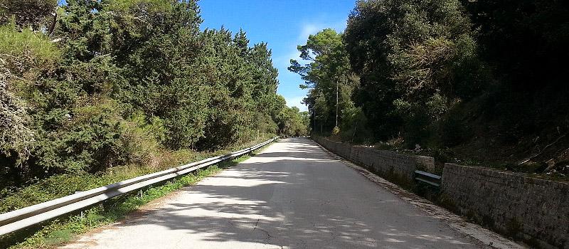 In the Bosco d'Alcamo