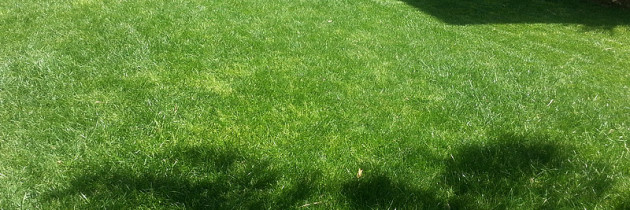 The most famous lawn in Sicily!